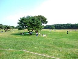 Takoagefield20081018
